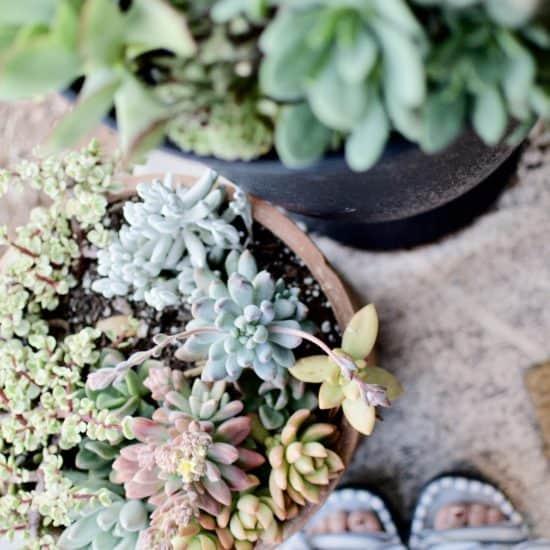 Spring Succulent Garden